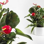 How to Plant a Desk Flower Garden