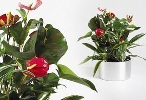 Desk Flower Garden