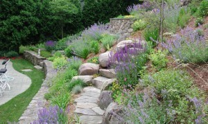 How to Plant on a Slope
